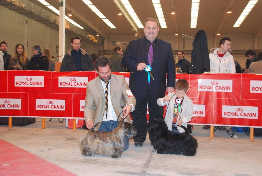 internacional-zaragoza-scottish-terrier